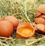 Mengenal Dampak Buruk Sering Mengonsumsi Telur Setengah Matang
