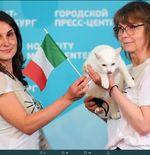 Turki vs Italia: Gli Azzurri Menang, Tebakan Kucing Peramal Terbukti Benar
