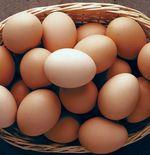 Tak Selamanya Buruk, Ini Manfaat Mengonsumsi Telur Setiap Hari