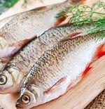 Manfaat Konsumsi Ikan untuk Gamer