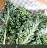5 Khasiat Daun Kale, si Ratu Sayuran bagi Kesehatan