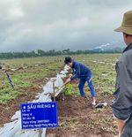 Beberapa Pemain Timnas Vietnam Pilih Bertani Sebelum Ikut Pemusatan Latihan