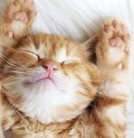 4 Bahaya Bulu Kucing dan Cara Mengatasinya