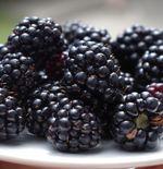 7 Manfaat Buah Blackberry untuk Kesehatan